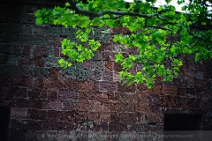 Spring leaves against the walls of Clinton Castle at Battery Park in lower Manhattan. Captured wide open at f/1.2.